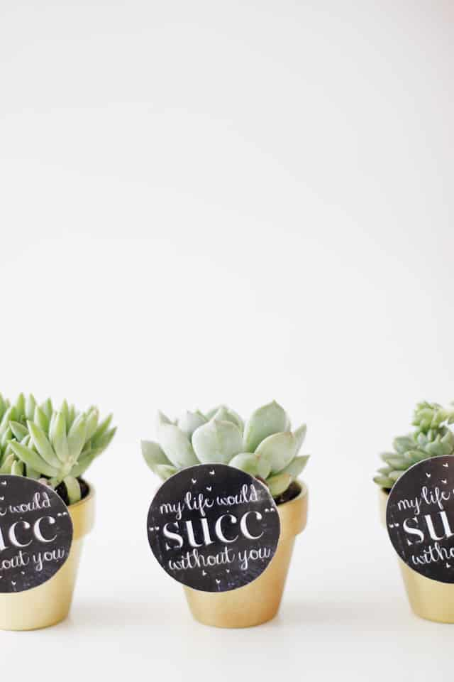 MY LIFE WOULD SUCK WITHOUT YOU - succulent valentine idea with free printable | fun Valentines for adults | diy Valentines | homemade Valentines | free valentine printable || See Kate Sew #valentineprintables #diyvalentines #valentinesday