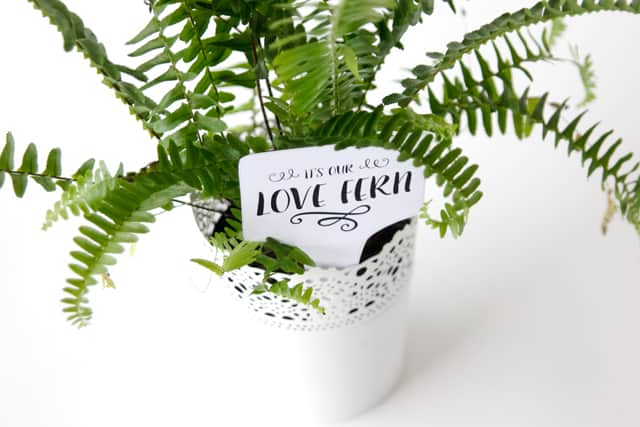 LOVE FERN Valentines | See Kate Sew