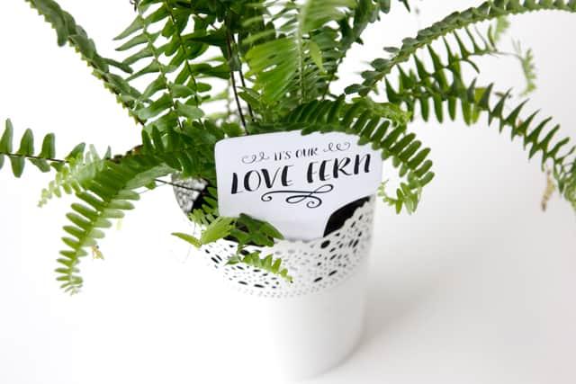 LOVE FERN Valentines | See Kate Sew