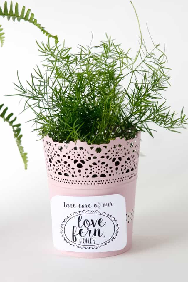 LOVE FERN Valentines | fun Valentines for kids | diy Valentines | homemade Valentines | free valentine printable || See Kate Sew #valentineprintables #diyvalentines #valentinesday