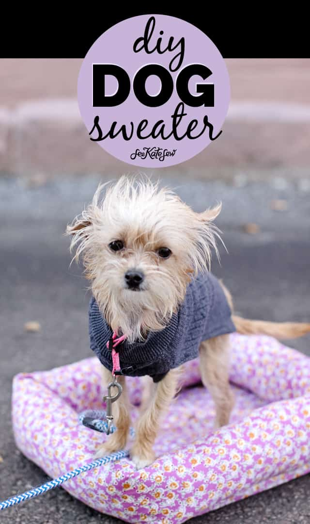 picture regarding Dog Coat Sewing Patterns Free Printable named doggy sweater sewing routine and adorable dog photos! - look at