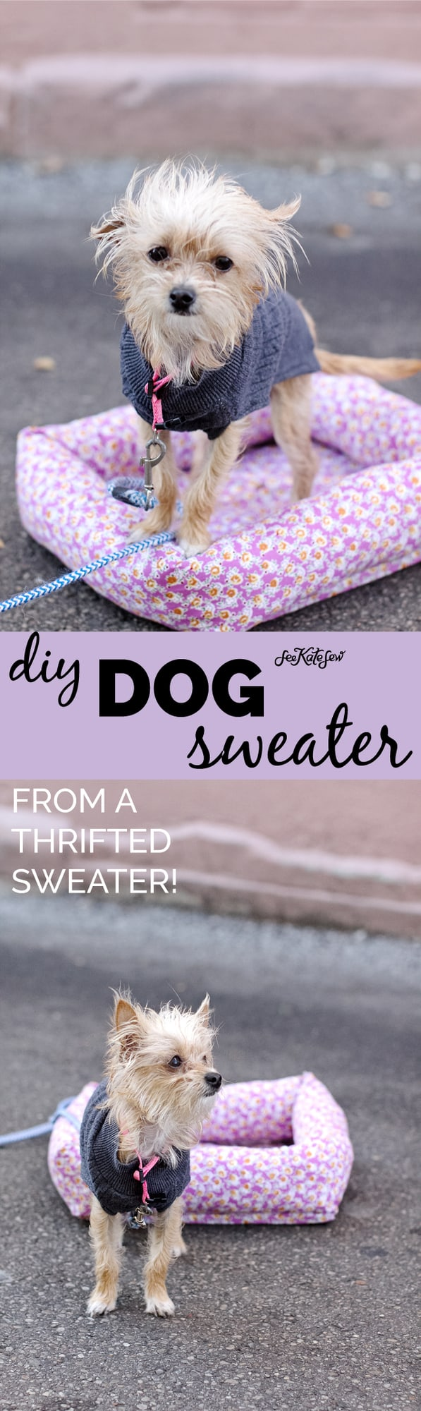 DIY Dog Sweater Pattern | homemade dog sweater | dog sweater diy | how to sew a dog sweater | dog sweater pattern | dog sweater template | easy sewing tutorials | sewing projects || See Kate Sew #dogsweater #diydogclothes #sewingproject