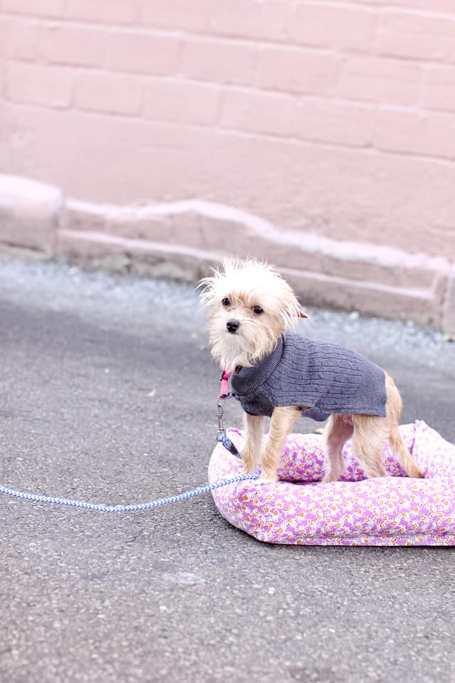Free Easy Dog Bed Sewing Patterns