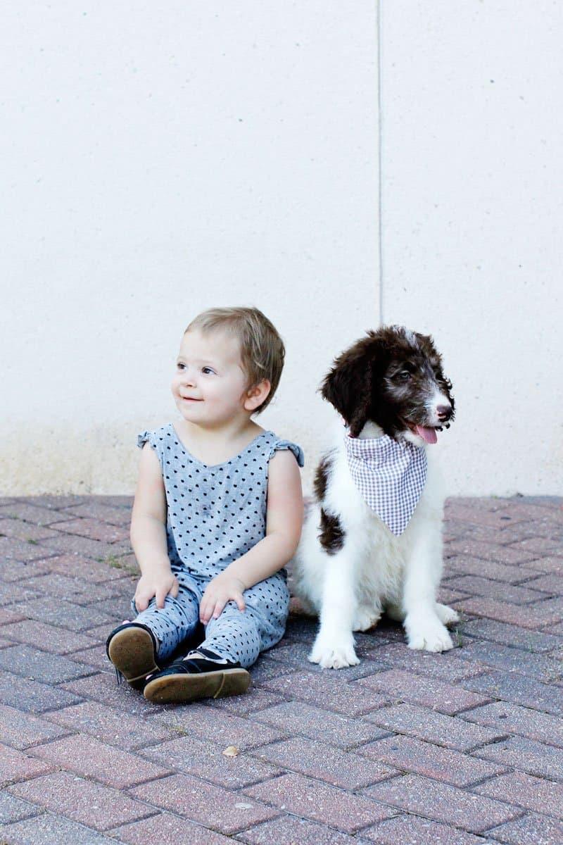 Dog Bandana Sewing Pattern | Free Dog Bandana Template